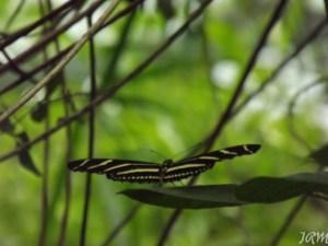 Butterfly Garden 062